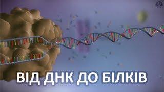 Від ДНК до білків [yourgenome]
