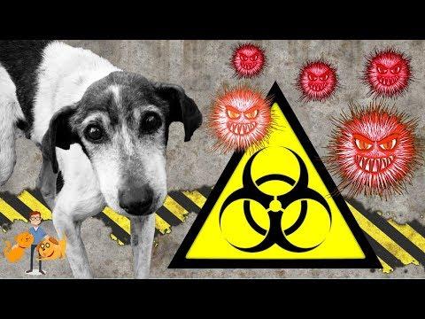 The Antibiotic Apocalypse (antibiotic resistance in pets)