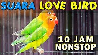 10 JAM NONSTOP - SUARA KICAU BURUNG LOVE BIRD - LAKBET - LABET GACOR