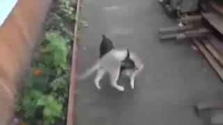 funny pet video