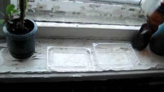 Заливает потолок(, 2010-12-13T08:03:50.000Z)