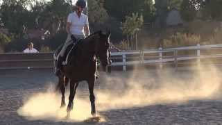 "Franklin & Lynn Cofield - 3rd Level Dressage - ""An Evening Of The Horse"" 2013"