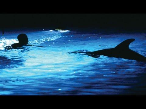 [Film] Musique - Grand Bleu