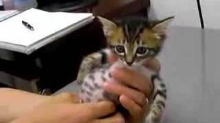 赤ちゃん猫★病院にて絶叫中 thumbnail