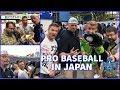 Pro Baseball in JAPAN   Yokohama Baystars GAME EXPERIENCE