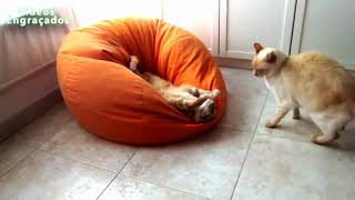 FUNNY ANIMALS COMPILATION TRY NOT TO LAUGH  Part 2