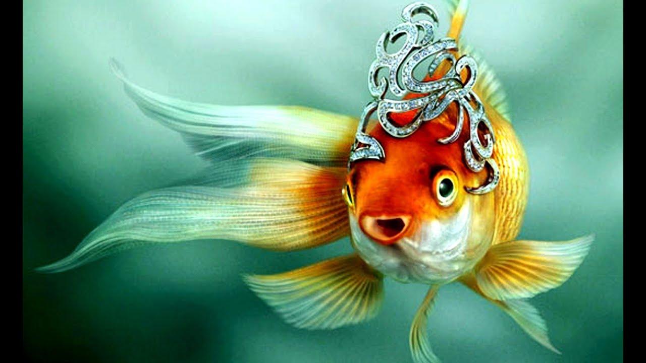 Золотая рыбка. Три желания. Геннадий Балашов - YouTube