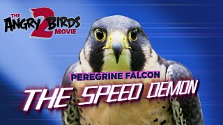The Angry Birds Movie 2 | Falcon