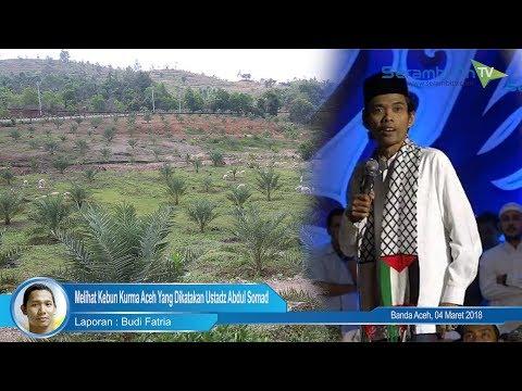 Melihat Kebun Kurma Aceh Yang Dikatakan Ustadz Abdul Somad