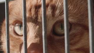 RSPCA Reaches More Supporters To Rehome More Animals with IBM Watson Marketing