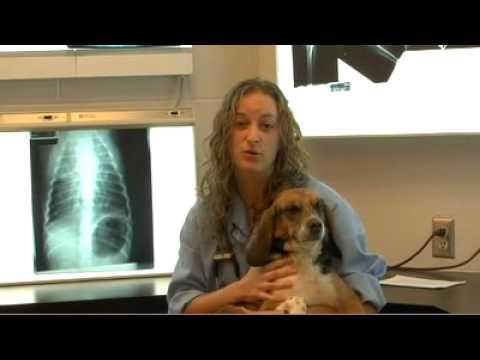 """UPEI: """"I've always dreamed of becoming a vet..."""""""