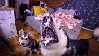 собачьи шалости / dog pleasure
