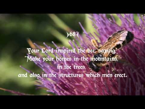 "16 Surah An-Nahl سورة النحل ( ""The Bees"") by Mishary Rashid Alafasy - Wahidudin Khan"