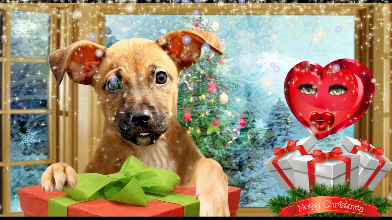 Christmas animated dog sends greeting to all my friends christmas animated dog sends greeting to all my friends kristyandbryce Image collections