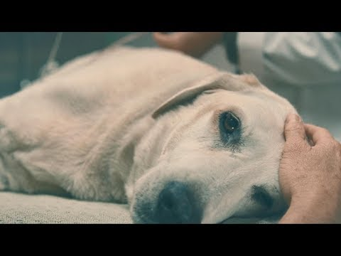 Kodaline - Brother (Marley & Me) Music Video