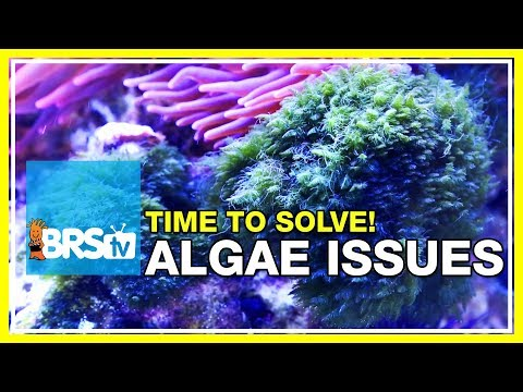 Week 48: Keep Algae Out Of Your Reef Tank FOREVER! | 52 Weeks Of Reefing