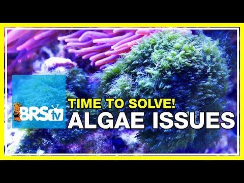 Week 48: Solving your reef tank