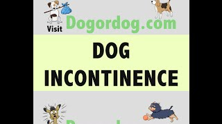 Treatment options for Urinary Incontinence in Dogs