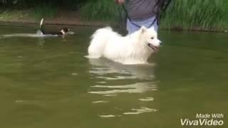 Education canine Angers Approche de l'eau en Loire