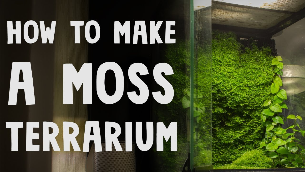 How To Make A Moss Terrarium Youtube