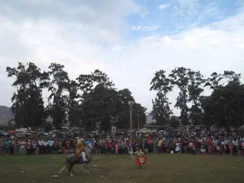 1 VENDIMIA CARRETRIA, PATIVILCA, PERU 2014