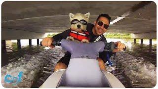 Dog Rides Jet Ski | Jet Ski Westie