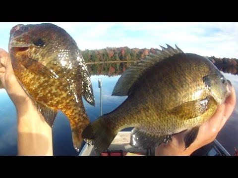 Bait fishing 64 worm fishing for 66 bluegill and for Bluegill fishing bait
