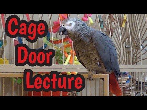 Einstein Parrot's Cage Door Lecture