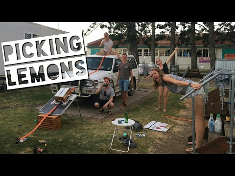 Colin & Vivian picking lemons in Bundaberg