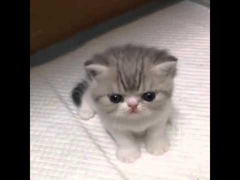 Yavru Kedi Sesi