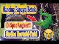 Mancing Papuyu Di Spot Paling Angker Strike Bertubi Tubi Tanpa Ampun  Mp3 - Mp4 Download