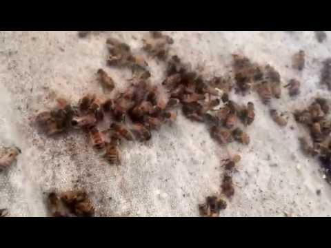 Hive Maps, Bee Clinic III, Live Bee Removal Colorado Ave, La Mesa, Hive Saver Net, thanks you Corky
