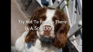 English Springer Spaniel Separation Anxiety Treatment