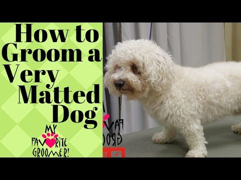 Grooming a very matted dog