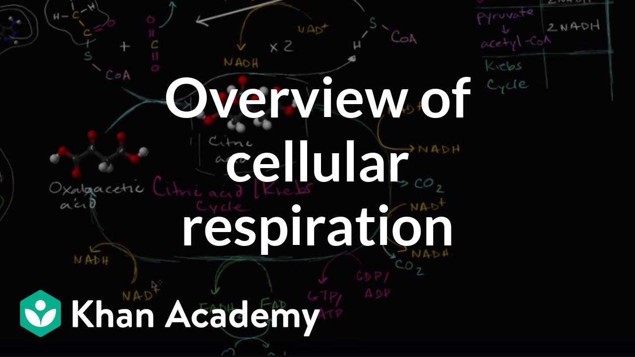 Overview Of Cellular Respiration Video Khan Academy