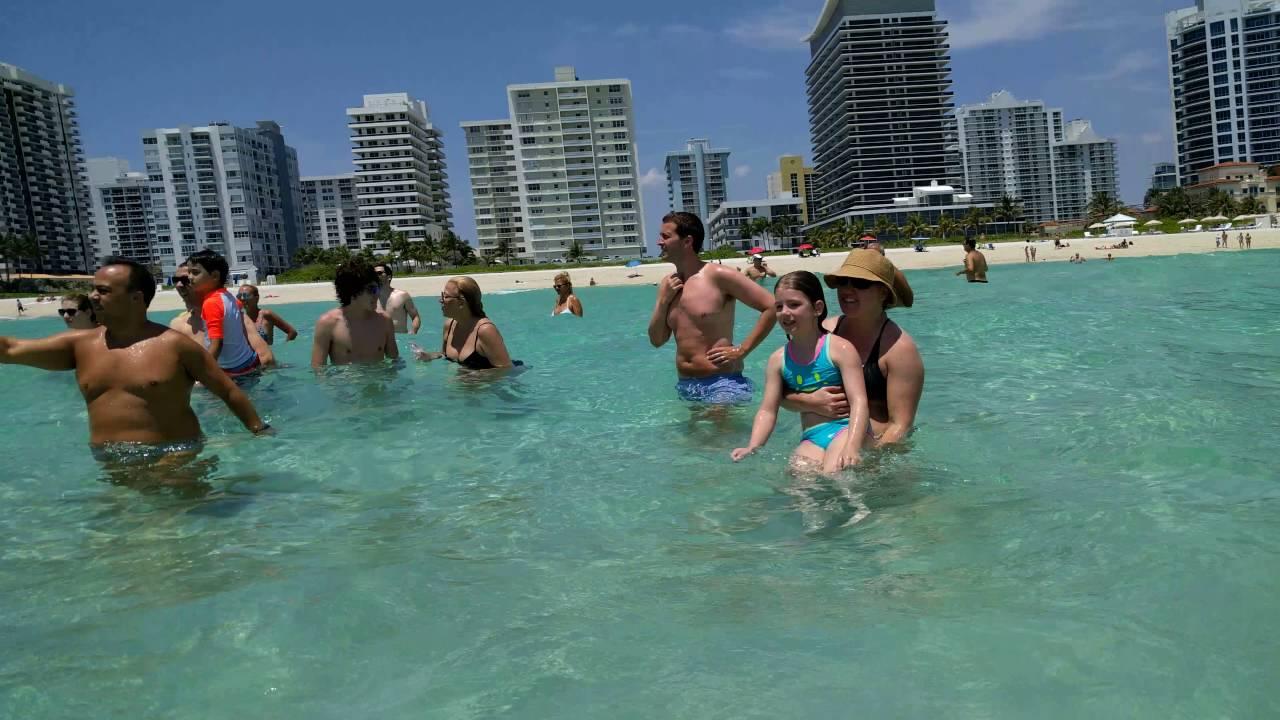 Manatee Mating Miami Beach S 5 15 16