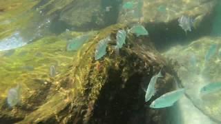 Snorkeling at the Destin Jetties - raw video 9