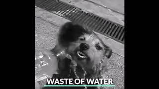 New Essential Dog Water Bottle!