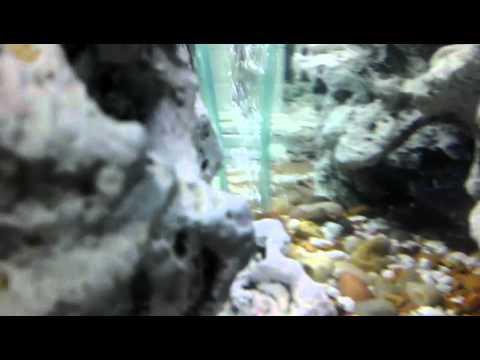 36 gallon bowfront aquarium iron maiden inspired youtube rh youtube com