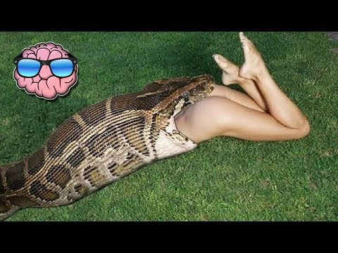 10 Pet Animals That ATE Their Owners