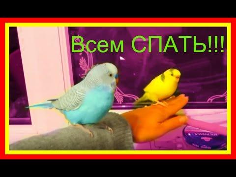Вопрос: Как развлечь своего попугайчика или другую птицу?