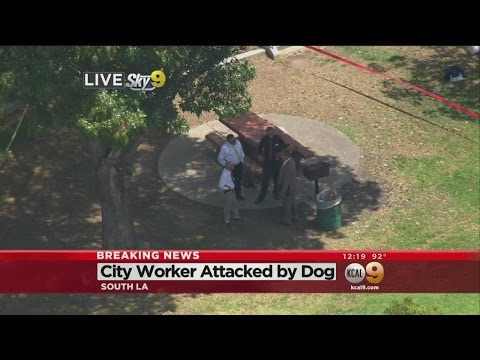 Police Shoot Pit Bull After Attack On City Worker