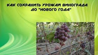 как сохранить виноград до