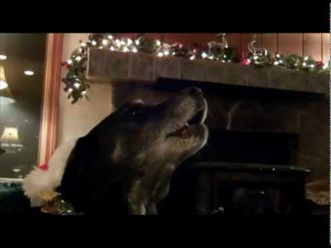 Amazing Cat and Dogs Sing Silent Night