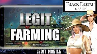 Understand where to farm!  Farming/Grinding Guide, Beginners Tips & Tricks, Black Desert Mobile