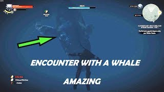 Witcher 3: Amazing Encounter with a Whale (blue whale)  Easter Egg (60 fps)