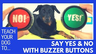 How to teach y๐ur dog to say YES and NO with buzzer buttons using positive reinforcement