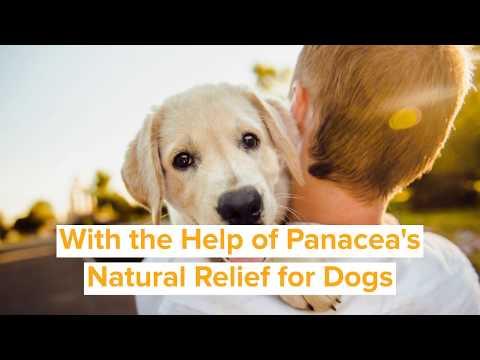 Panacea's CBD Pet Products - Daisy's Testimonial