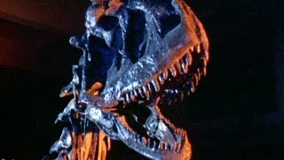 Completed Dinosaur Fossils Revealed