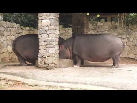 Guia Cultural - Zoologico de São Paulo.